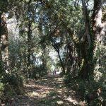 Interno del bosco  (foto di Francesca Marini)