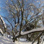 Sotto la neve 2 (foto di Stefano Battaglini)