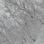 Sotto la neve (foto di Stefano Battaglini)