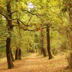Particolare della Riserva in autunno