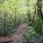 Un sentiero nel bosco