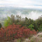 Boscaglia versante occidentale